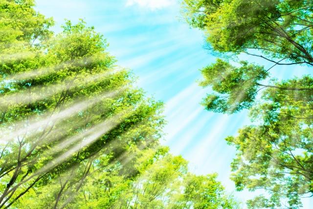 一日のうちで一番紫外線が強い時間帯